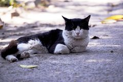 Black and white cat slipping on a road fat cat stock photos