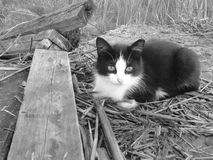 Black and white cat. Royalty Free Stock Photos
