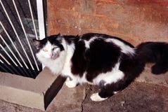 Black and white cat standing near windowsill of basement floor window, brick wall background. Black and white cat standing near windowsill of basement floor royalty free stock photography