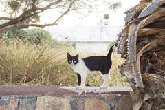 Black white cat standing on the stone wall Stock Images