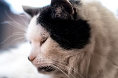Black and white cat starring on the floor. Black and white cat sitting and starring on the floor Stock Photography