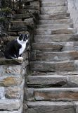 Black and White Cat and the Steps Royalty Free Stock Image