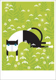 Black & white cat test on grass. A  black and white cat is laying on the grass Royalty Free Stock Image