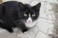 Black and white cat. On the tile royalty free stock image