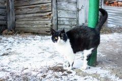 Cat village winter stock photos