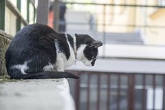 Black and white cat. On the wall stock photography