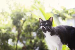 Black and white cat on the wall looking up to the sky Stock Photos
