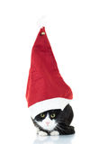 Black and white cat wearing big christmas hat Royalty Free Stock Photo