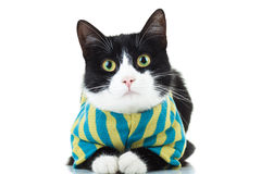 Black and white cat wearing clothes Stock Images