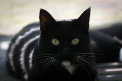 Black and white cat and whiskers with sunstripes Stock Photo