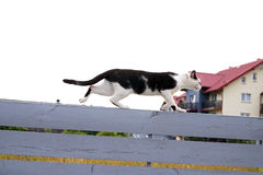 Black-white cat on wooden fence. Multicolored black and white cat is prowling along wooden fence edge. Cat is a random bred Royalty Free Stock Image