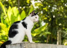 Black & white cat with yellow eyes Royalty Free Stock Images