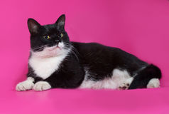 Black and white cat with yellow eyes lying on pink Stock Photos