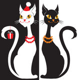 Black and white cats Stock Photography