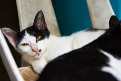 Black and white cats sleeping on chair cats close up, selective Stock Photos