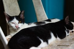 Black and white cats sleeping on chair cats close up, selective Stock Images