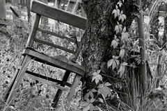 Black and white chairs. Black and white photos of a Chair that is up against a tree royalty free stock image