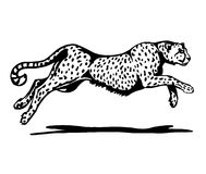Black and white cheetah Stock Images