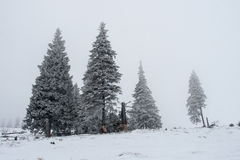 Black and white christmas trees in the fog Royalty Free Stock Image