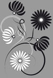 Black and white chrysanthemums. Gray background with a floral pattern Stock Image