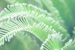 Delicate tender close up view of beautiful green palm leaf on natural background stock photos