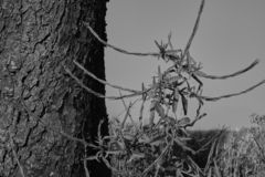 Black and white close up view of a tree with a plant stock image
