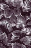 Black and white closeup plant background Royalty Free Stock Images
