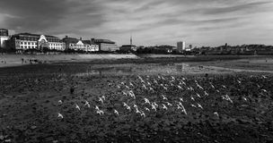 Black and white coastal scenery Royalty Free Stock Photography