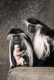 Colobus family portrait Stock Images