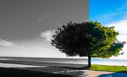 A Black and White / Color split image of a single tree in front of a lake stock photography
