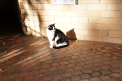 Black and white colors cat on the street Royalty Free Stock Image