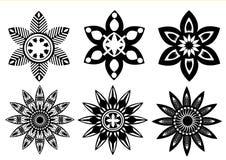Black white colors flowers Stock Image