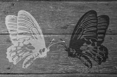 Black and white common birdwing butterflies Stock Images