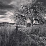Black and White Cottonwood Tree. On a Winter Day stock photos
