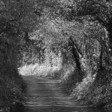 Black and white country lane Stock Photos