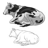 Black And White Cow Lying Down. Cow in lines. Cow on white background. Vector stock illustration