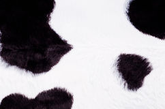 Black and white cow skin background Stock Image