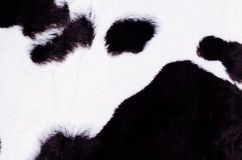 Black and white cow skin Stock Images