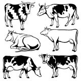 Black and white cows vector set Royalty Free Stock Photography