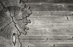 Black and white cracked cross section of pine tree trunk Stock Photography