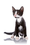Black and white curious kitten costs on a white background. Royalty Free Stock Image
