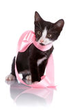 Black and white curious kitten with a pink tape. Stock Photos
