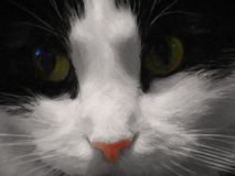 A black and white cute brooding cat with big green eyes and a pink nose. NPortrait of a fluffy pet with a thoughtful look and a sweet bright pink nose - the Royalty Free Stock Photography