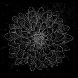 Black and white dahlia flower isolated. Royalty Free Stock Images