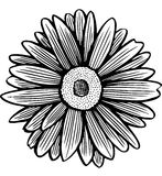 Black and white daisy flower Stock Image
