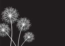Black and white dandelion Royalty Free Stock Photography