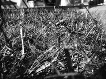 Black&white de la hierba Imágenes de archivo libres de regalías