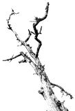Black and white dead tree branches Royalty Free Stock Photos