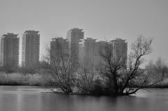 Black and white delta bucharest. Delta bucharest in black and white Stock Photography