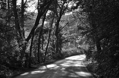 Black and white. Detailed trees road during daylight Royalty Free Stock Photography